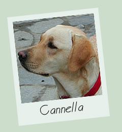 Una statua per Cannella: via alla pet…izione su change.org