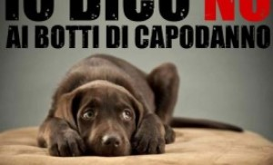 croppedimage701426-Animal-Amnesty-contro-i-botti-di-capodanno-272x240