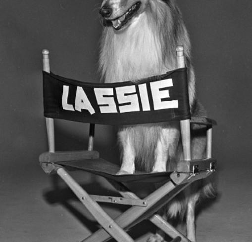 Cani attori: che fine hanno fatto? Sulle tracce di Lassie & C.