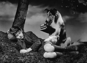 Un frame dalla serie tv Lassie