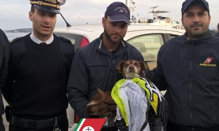 Cagnolino cade in mare nel porto di Olbia: lo salva la guardia costiera