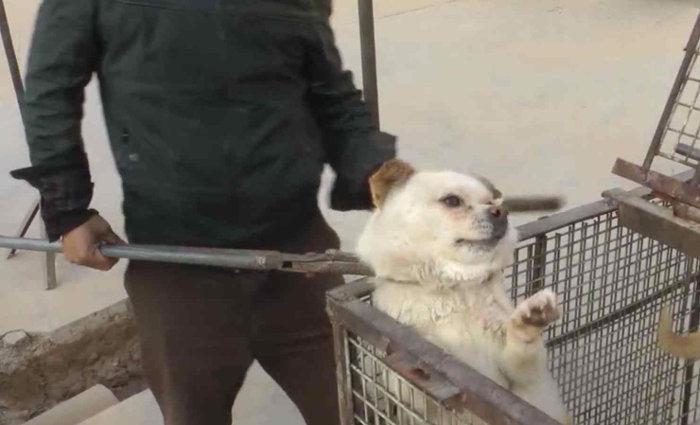 Stop al massacro di cani per farne borse e indumenti. QualaZampa firma la pet…izione