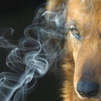 Milano dice basta al fumo passivo per i quattro zampe