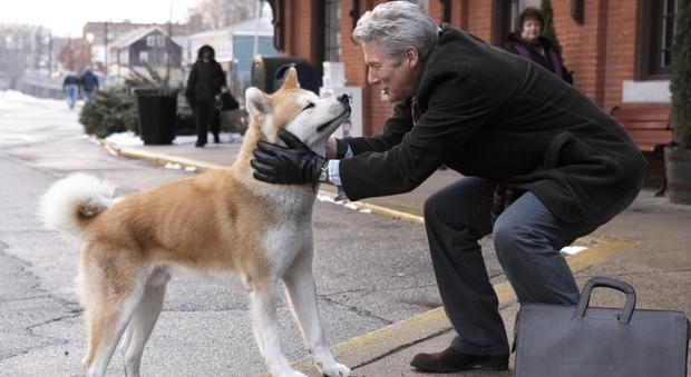 Andalusia, cane aspetta due mesi il padrone morto davanti all'ospedale