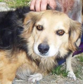 Raccolta cibo a Torino per il canile svaligiato a Villacidro: è staffetta solidale