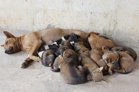 """Stop al randagismo, dal Pd la proposta: """"Sterilizzazione o tassa per i cani non a riproduzione"""""""