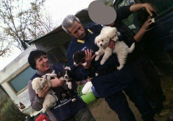 La fattoria degli orrori si trova a Agropoli: liberati da Enpa sette cuccioli e la loro madre