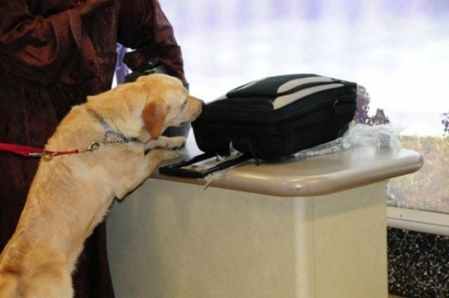 Cane fiuta-soldi ritrova i risparmi di una vita perduti da due anziani. Li avevano nascosti, troppo bene, in cucina
