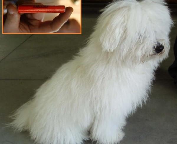 Toglie al suo cane un petardo trovato a terra: gli esplode in mano