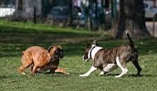 Empatia, i cani ne sono capaci anche tra loro