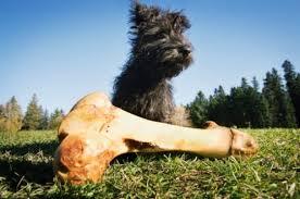 Pisa, passeggia col cane e lui ritrova un osso. Forse è umano