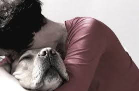 Viaggio nel cuore del cane: riconosce le emozioni altrui, lo dice la scienza
