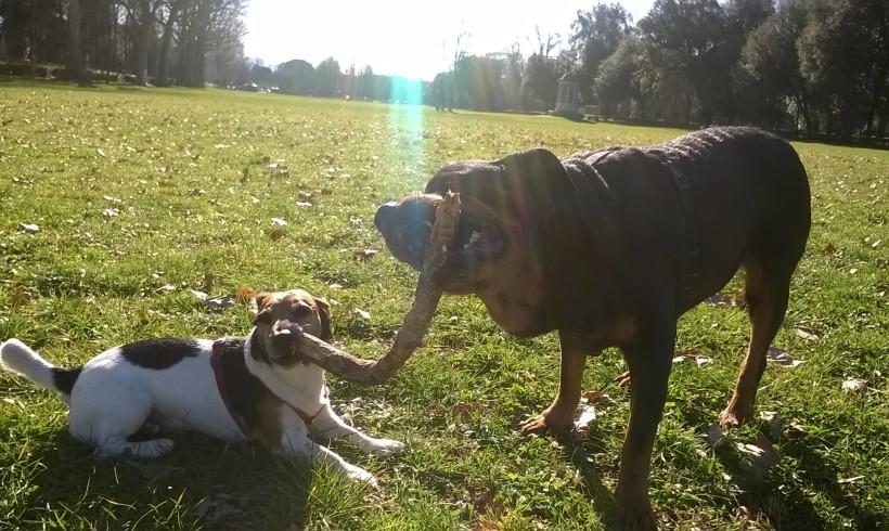 """""""Non lanciate bastoni ai cani, è pericoloso"""": allarme dei veterinari della Corona"""