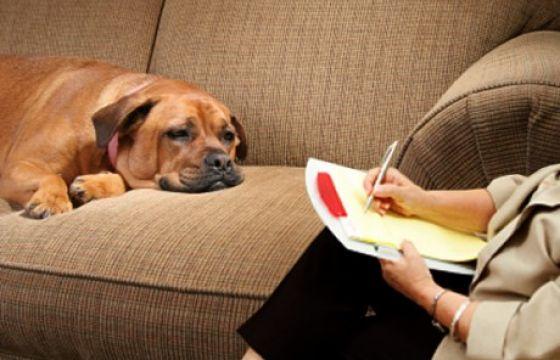 Anche il cane va dallo psicologo. E spesso il suo problema siamo noi