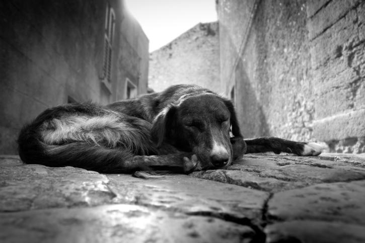 Torturano e uccidono un cane: PETizione perché siano puniti secondo la legge