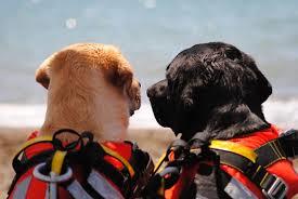 A Pitti Uomo Armata di Mare veste i cani da salvataggio. Anche Sics in passerella