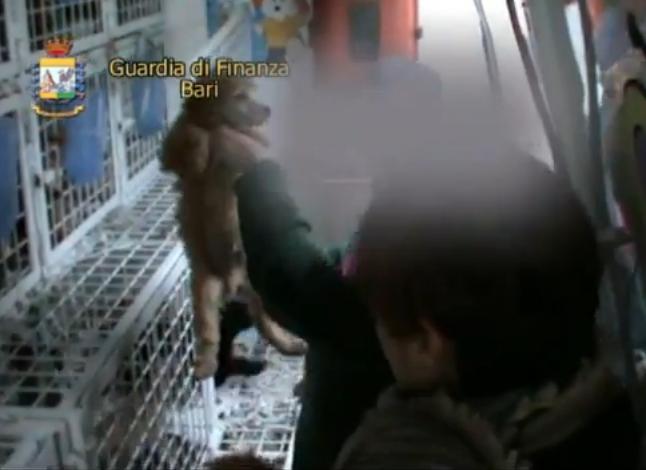 Traffico di cuccioli, sequestrati 52 piccoli in arrivo dall'Est