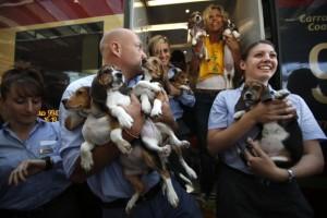 Alcuni dei cuccioli dopo la liberazione