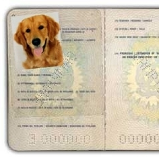 "All'estero a 6 zampe? Serve il ""pet passport"". In Toscana la Asl Centro spiega come"