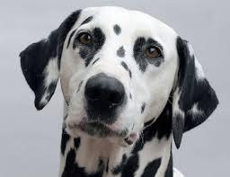 Orrore a Carugate: lascia il cane ustionato senza cure, lo divorano le larve. Enpa denuncia