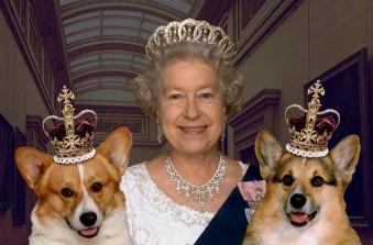 Lutto per la Regina, scomparsa l'ultima corgie di Buckingham Palace