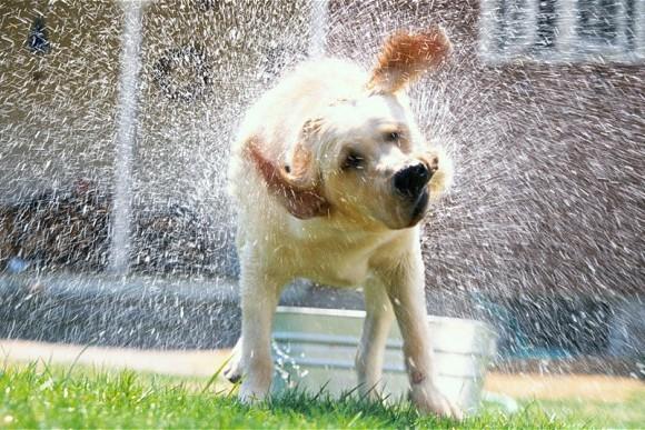 perché i cani bagnati puzzano