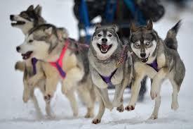 Sulla slitta tirata dai cani: è lo sleddog, sport invernale ma non solo
