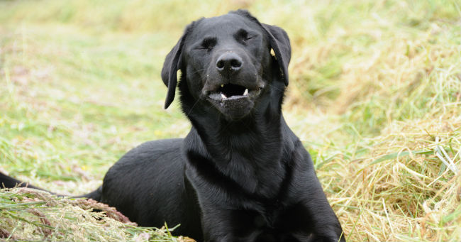 starnuto cane