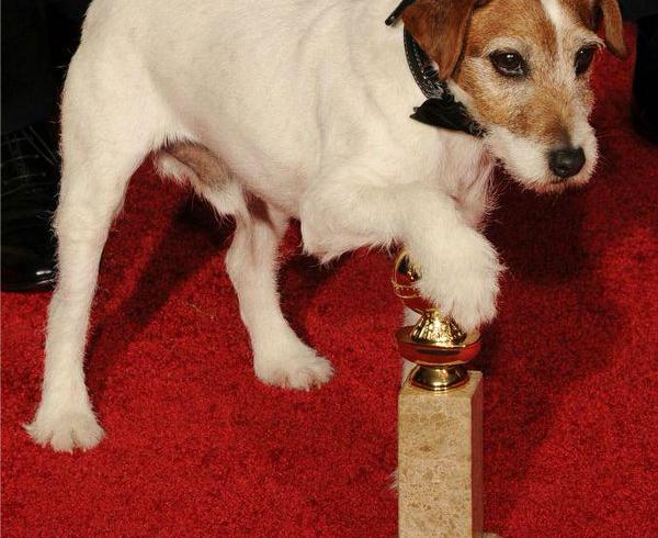 Dal red carpet al tappeto del salotto: il tuo cane è differente. A Monza Enpa spiega perché