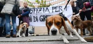 Fuori dal palazzo di giustizia, oggi, anche i beagle liberati e ormai cresciuti
