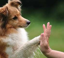 Perché i cani danno la zampa 2