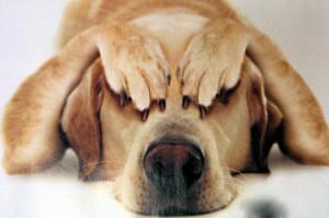 Perché i cani hanno paura dei tuoni