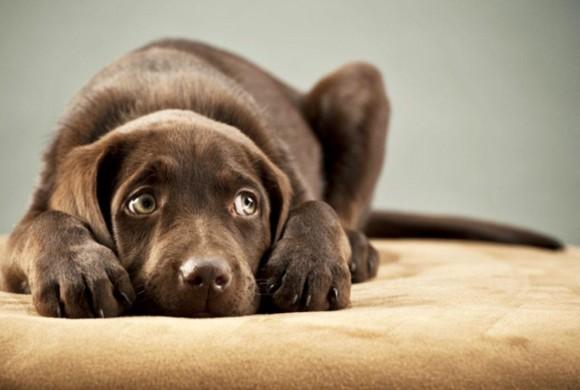 Perché i cani hanno paura dei tuoni?