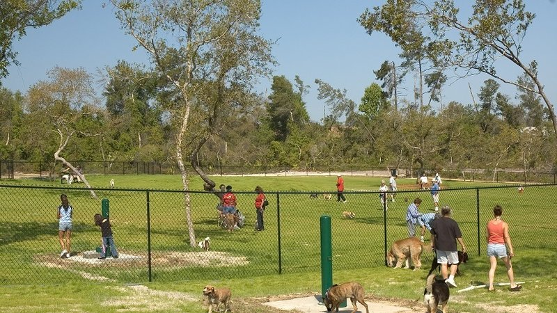 Ponzano vuole un parco giochi per i cani. E qualazampa.news firma la PET…izione