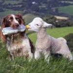 Gli agnellini non se li mangia neanche il cane. E tu?