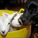 Non li sto assaggiando: li bacio