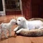"""""""Siamo due cuccioli, quale di noi vorresti mangiare?"""""""
