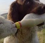 Gli agnellini non si mangiano, si nutrono