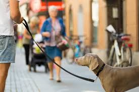 Cani urbani tra regole e necessità, se ne parla a Varese con un incontro gratuito