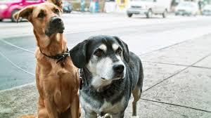 'Animali in città', Italia a due velocità nel V rapporto di Legambiente