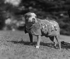 Cani in trincea, in Ucraina rasserenano i soldati