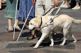 Accoglienza dei cani guida negli alberghi, la questione arriva in parlamento