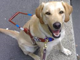 Bari a convegno per la Giornata nazionale del cane guida