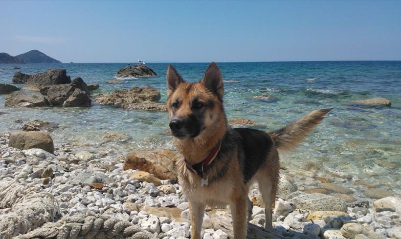 Primo soccorso per cani e altri animali: l'Elba ci prova