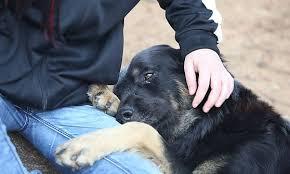 Strazio a Cesano Maderno: abbandona la sua cagnolina chiusa in casa per mesi, e lei muore di stenti. Denuncia Lndc