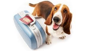 Benvenuti a bordo! La Delta Airlines apre la cabina ai cani