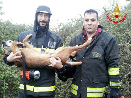 Due giorni impigliato tra i rovi: Lillo recuperato dai pompieri