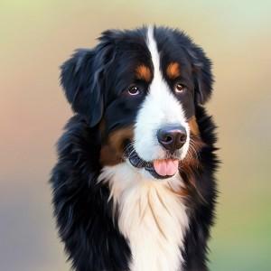 Perché i cani tremano 2