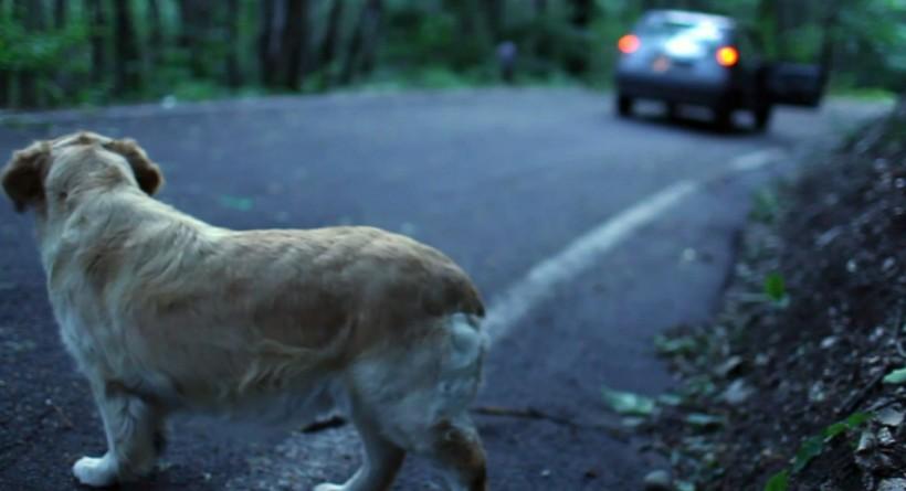 Fiumicino, pugno duro contro chi abbandona il cane: fino a 10mila euro di sanzione