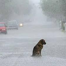 Molla il cagnolino sul ciglio della strada: rintracciato e denunciato. Per il piccolo già una nuova famiglia